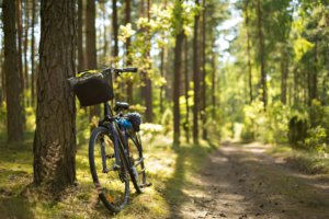 Bike in the forest